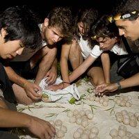 The young explorers work with corals and turtles